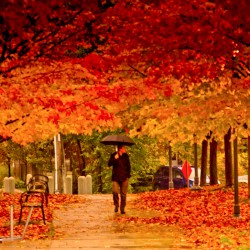 Autumn_in_Toronto