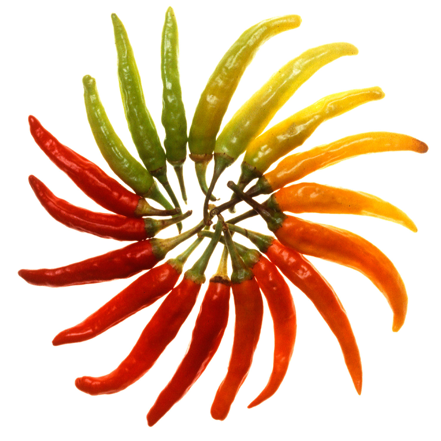 Charleston_Hot_peppers_white_background